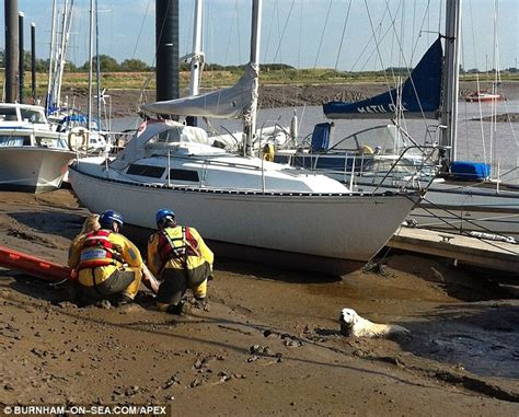 louis ck boat daily news dog walker rescued from mudflats after getting stuck