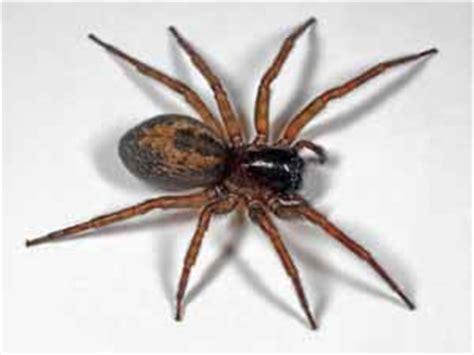 kleine rode spinnetjes in huis overige insecten spinnen en mijten