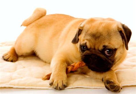abotonada por un perro videos de zoofilia abotonada por un perro videos de zoofilia