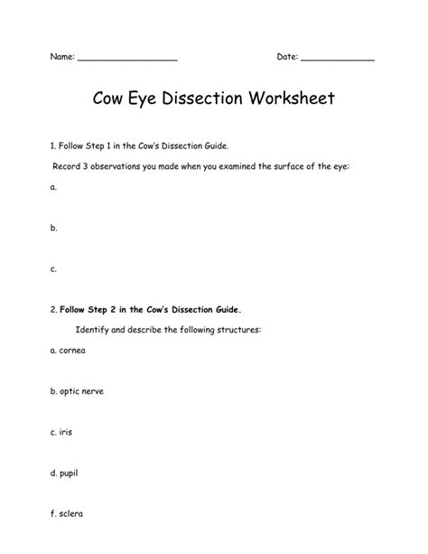 Cow Eye Dissection Worksheet by Cow Eye Dissection Worksheet Answer Key Stinksnthings