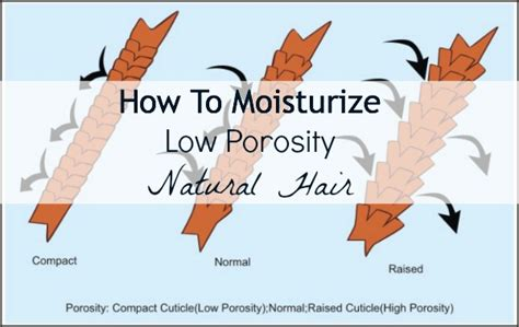Hairstyle Products With Nutrients by How To Moisturize Low Porosity Hair We Moved To