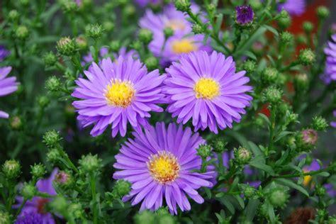 flower plants birth month flowers hgtv