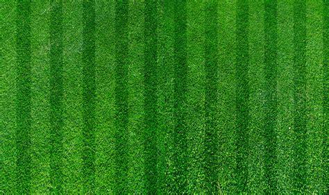 concimazione tappeto erboso la cura tappeto erboso in primavera e in estate