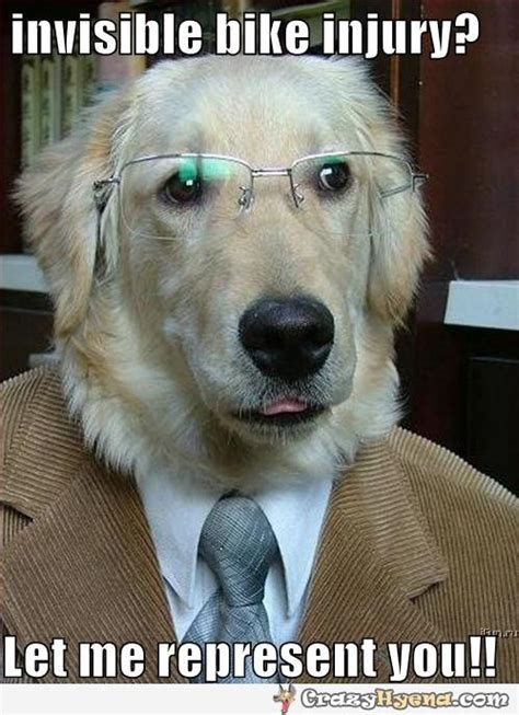 Accountant Dog Meme - injury lawyer dog let me represent you