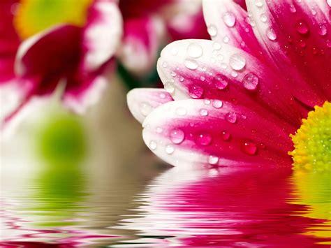 fotos para fondo de pantalla flores wallpaper for girls flores fondo de pantalla gratis hd