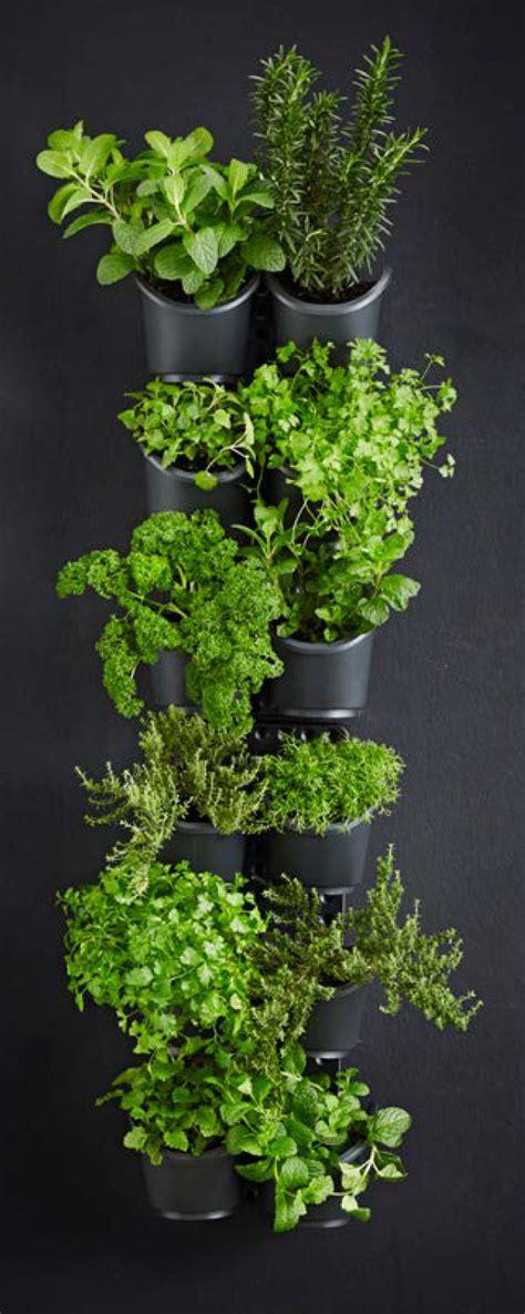 how to create a greenwall vertical garden holman