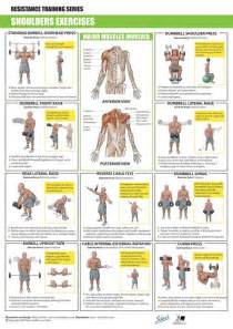 shoulders exercises shoulder exercise
