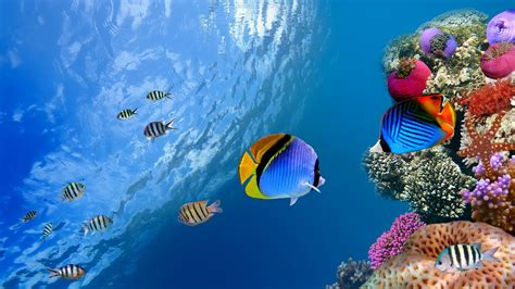 imagenes de wallpapers hd imagenes fondo marino hd imagui