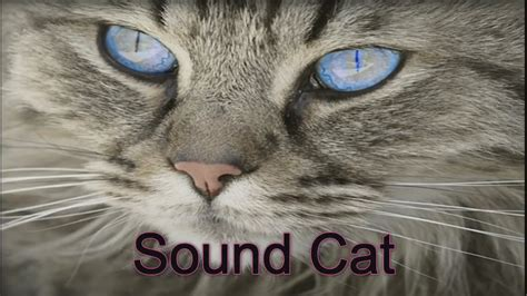 sounds that make dogs go animal sounds that scare cats cats