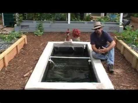 backyard shrimp farming how we add freshwater prawns shrimp to our aquaponics