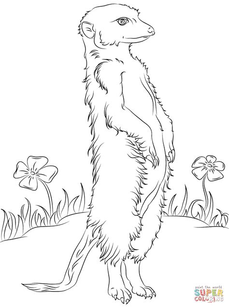 Meerkat And Flowers Coloring Page Free Printable Meerkat Colouring Pages