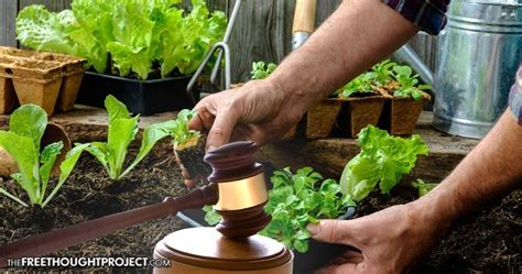 Backyard Gardens Illegal by Vegetables Are Miami Judge Front Yard Gardens