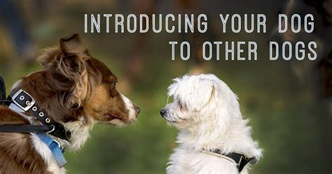 introducing dogs introducing your to other dogs