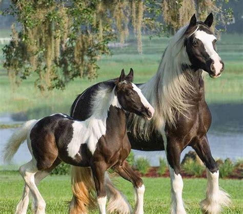 imagenes de unicornios salvajes 17 mejores im 225 genes sobre caballos y cebras en pinterest
