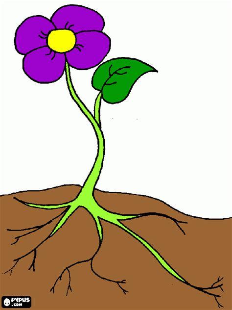 Planta Online planta ornament para colorear planta ornament para imprimir