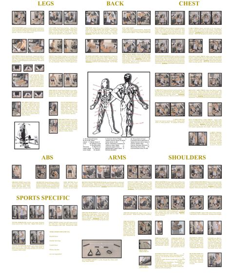 home gym design planner home gym workout plan diet health pinterest best