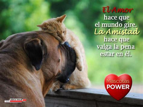 imagenes de amor y amistad juntas im 225 genes de perros con frases cortas de amor para