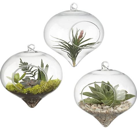 kitchen window terrarium hanging glass terrarium contemporary terrariums by cb2