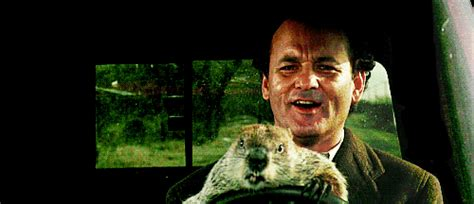groundhog day gif happy day gif find on giphy