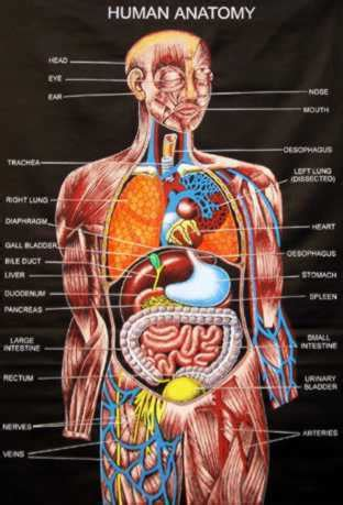 full female anatomy human anatomy images human anatomy wallpaper and