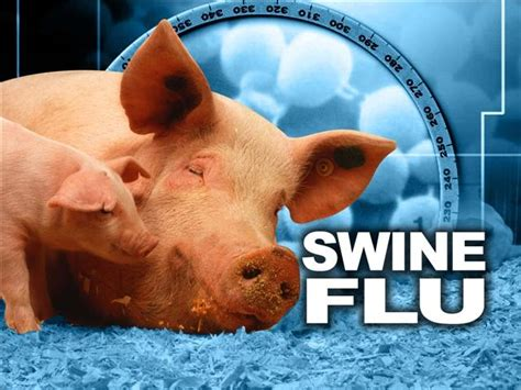 swing flu is the government hiding something about swine flu