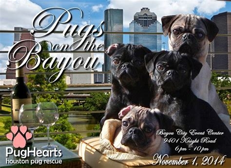 year of the pug pughearts announces pugs on the bayou bash and fundraiser pughearts houston pug
