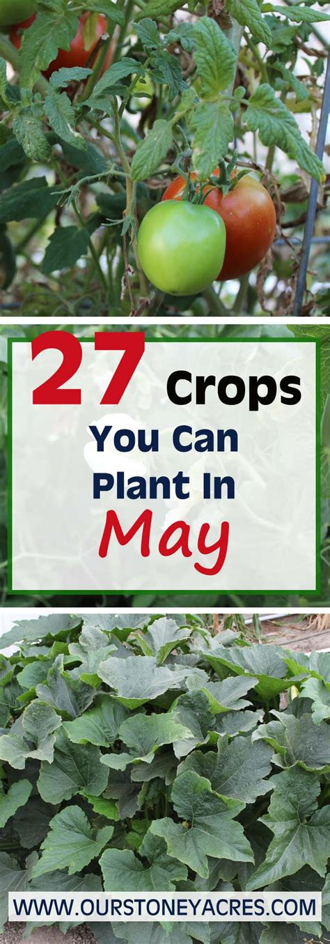 When Should I Plant A Vegetable Garden May Planting Guide 27 Crops To Plant This Month