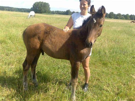 breeding horses mares stallion stallions in apex autos post