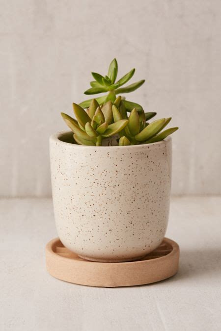 terrariums indoor planters urban outfitters