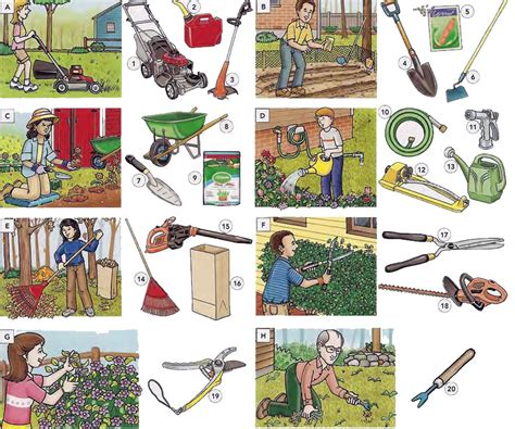 gardening tools actions and garden maintenance vocabulary pdf learning english vocabulary and