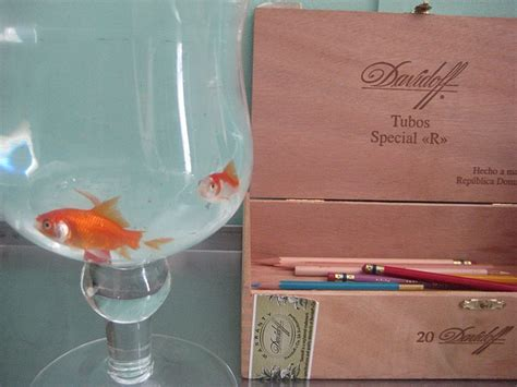 new year diy goldfish 1000 images about norooz new year on
