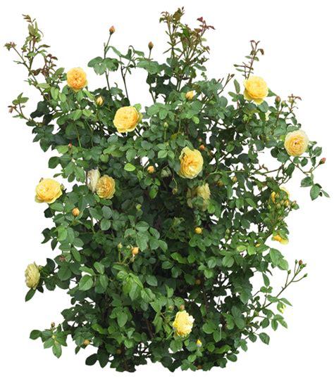 imagenes de flores sin fondo plantas con flores en png y sin fondo
