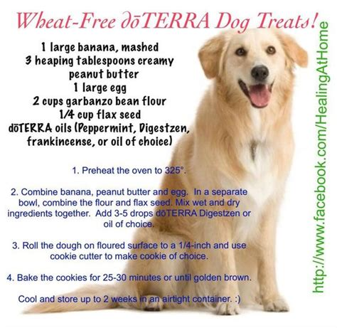 essential oils and dogs treats with essential oils a bull treats and