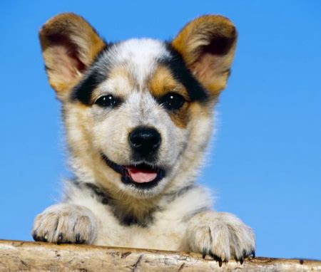 calm breeds medium sized breeds small and medium breeds mellow breeds large breeds picture