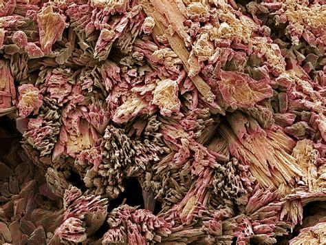 Sekrup Gypsum gypsum crystals sem photograph by steve gschmeissner