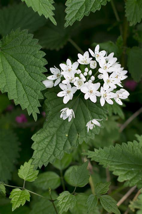 fiori velenosi attenti ai fiori sulle torte fiori commestibili e fiori