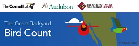 Great Backyard Bird Count Great Backyard Bird Count Starts Friday Wintu Audubon