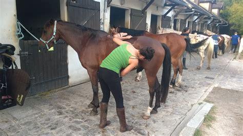 Lumiere A Pile 2963 by Centre Equestre Dreams 77