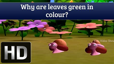 why are and green colors why are leaves green in color interesting facts about