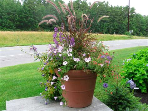 Potted Gardens Ideas Container Garden Design Ideas