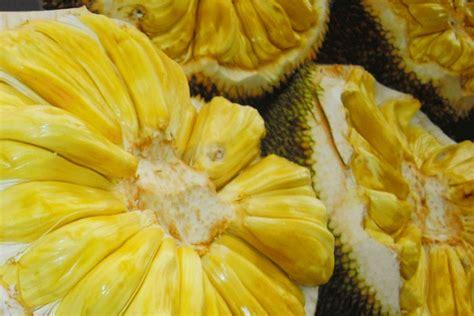 jackfruit bariball agriculture