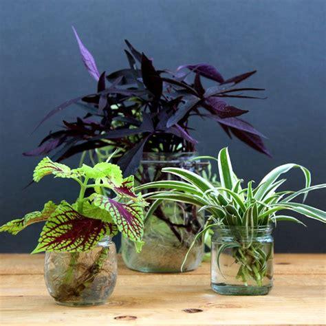 grow beautiful indoor plants  water water plants