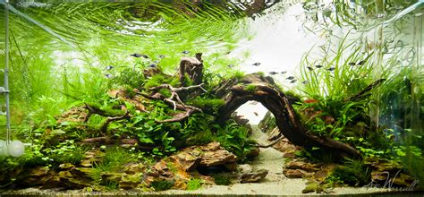 Aquascape How To by 90x45x45cm Planted Aquascape Frontal