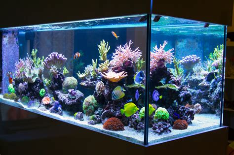 home aquariums enviropacs