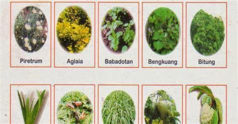 membuat zpt nabati cara membuat pestisida nabati pertanian organik
