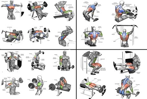 best workout routine for best workout routines for all bodybuilding
