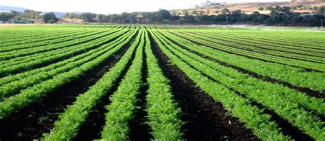 The Rebelo Agricultural Group   RAP   RPS   RAM   Johannesburg