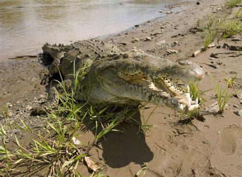 Top 10 Deadliest Animals in Costa Rica - Javi's Travel ...