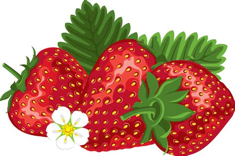 strawberry clipart strawberry clipart black and white clipart image 9 2