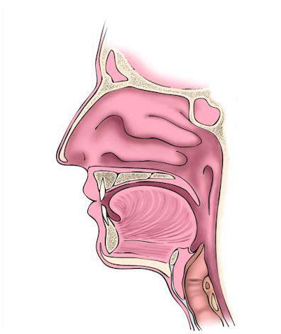vestibulo biliar fosas nasales y boca